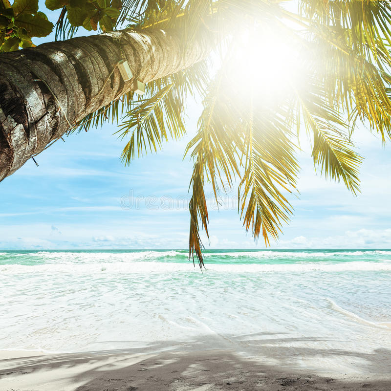 Download Tropical beach stock image. Image of square, bounty, tranquil - 29672277