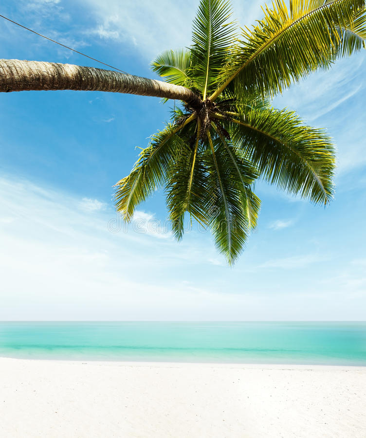 Download Tropical beach stock photo. Image of palm, tree, peaceful - 29672774