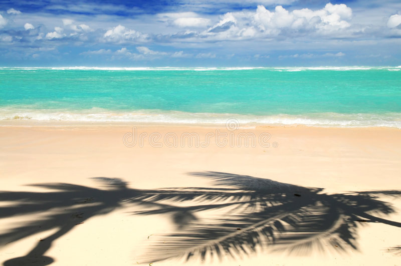 Download Tropical Beach Stock Photography - Image: 4697792