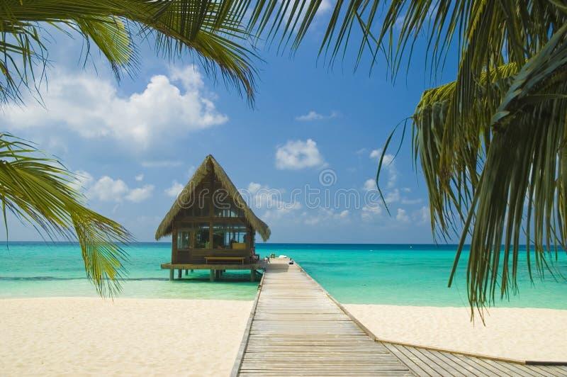Download Tropical beach stock image. Image of holiday, orange, coast - 4944207