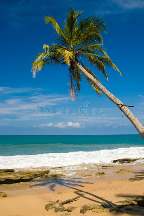 Download Tropical beach stock photo. Image of green, lagoon, nature - 5503106