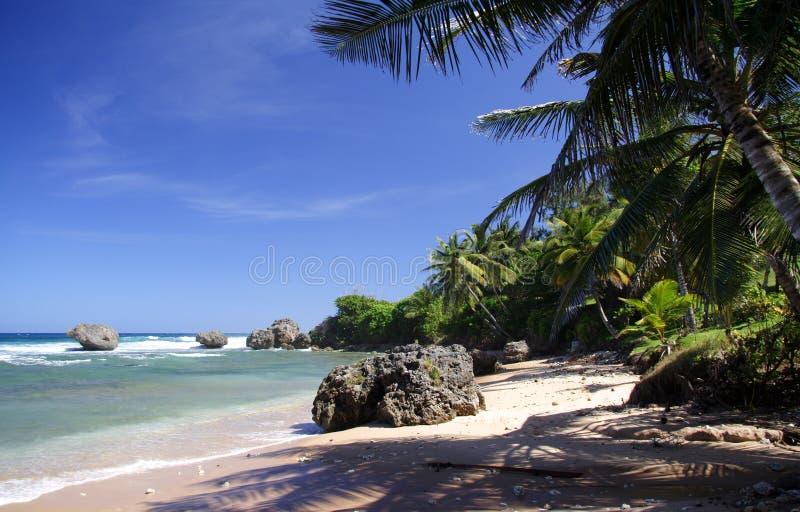 Download Tropical Beach stock photo. Image of fine, heaven, atlantic - 684500