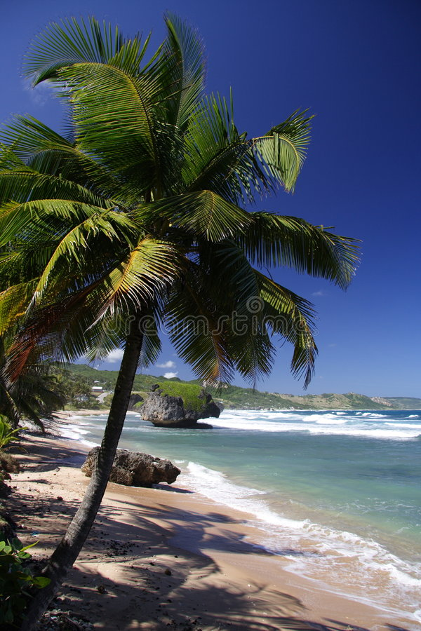 Download Tropical Beach stock image. Image of nice, holiday, relaxing - 684611