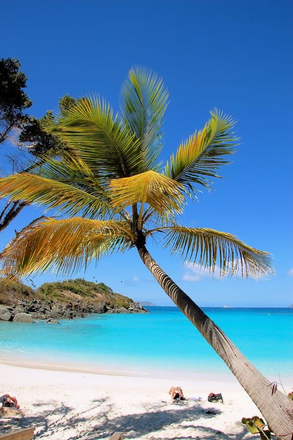 Free Tropical Beach Stock Image - 783551