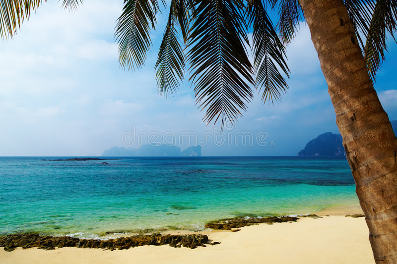 Download Tropical beach stock photo. Image of recreation, coastal - 7909598