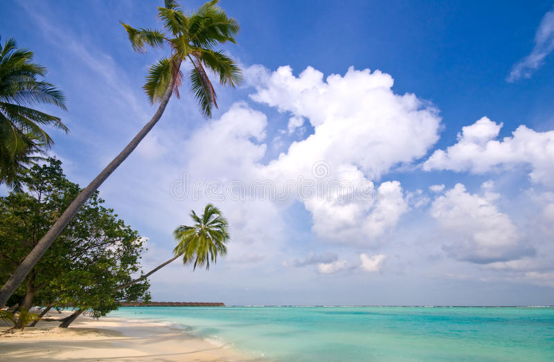 Download Tropical Beach Stock Photography - Image: 9463922