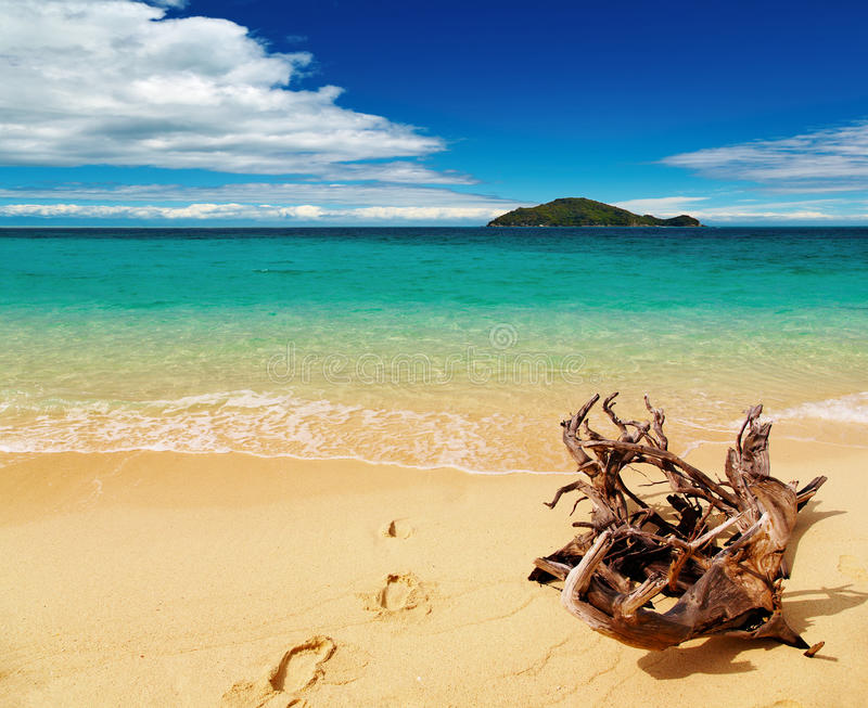 Download Tropical beach stock photo. Image of shore, beach, recreation - 9505160