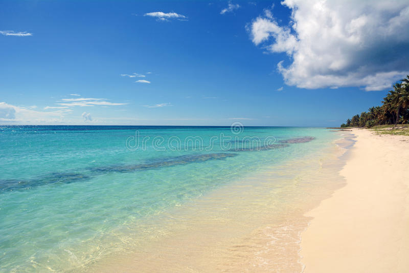Download Tropical beach background stock photo. Image of saona - 36112588
