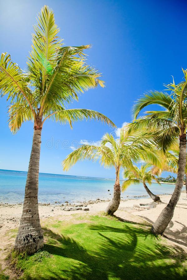 Download Tropical beach and bay stock photo. Image of palm, sandy - 35106224