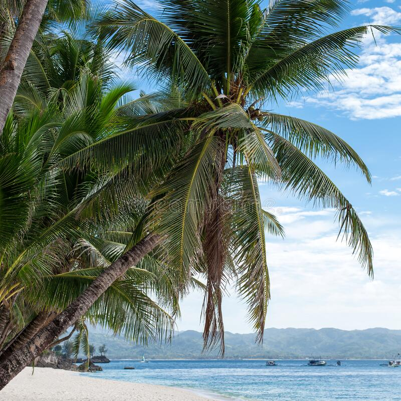 Tropical beach with beautiful palms and white sand, Philippines stock photo