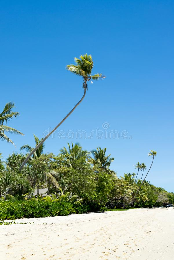 Tropical beach with lush vegetation Fiji stock images
