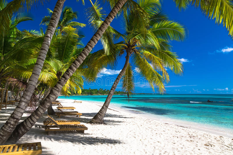 Tropical beach in caribbean sea, Saona island, Dominican Republic.  royalty free stock photo