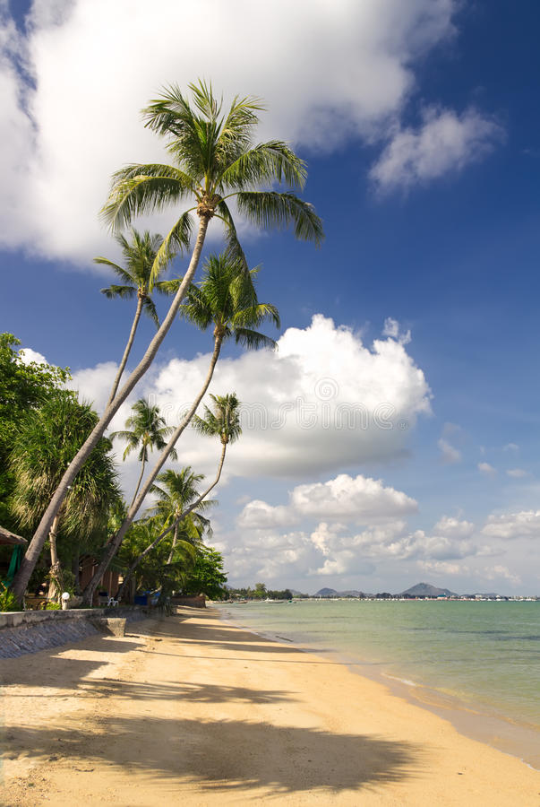 Download Tropical Beach With Coconut Palm Trees Stock Photo - Image: 28338414
