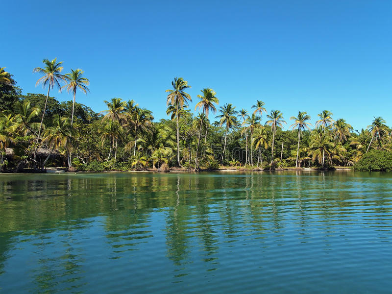 Download Tropical Beach With Coconut Trees And Calm Water Stock Image - Image: 23302873