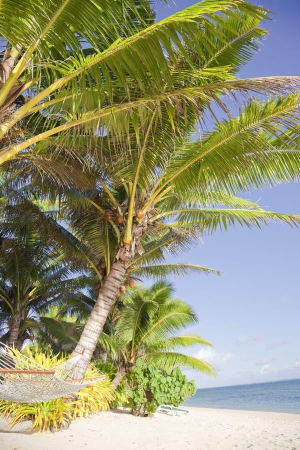 Tropical Beach with Hammock and Coco Palms. Rarotonga, Cook Islands, Polynesia royalty free stock photo
