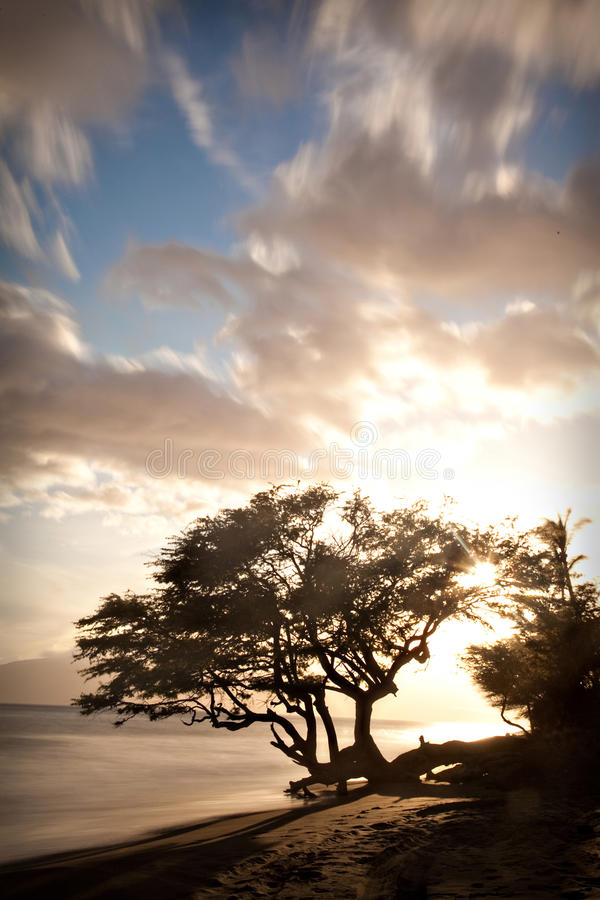 Download Tropical Beach stock image. Image of tree, beach, water - 39478765