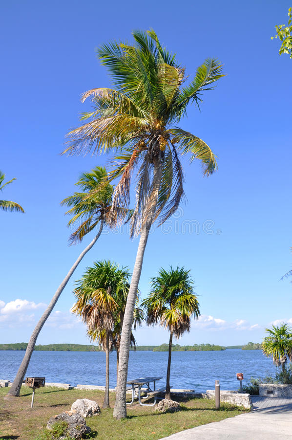 Download Tropical Beach, Key West stock photo. Image of destination - 29053264