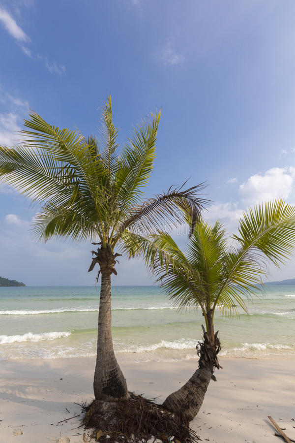 Tropical beach in Ko Rong with sea wave on the sand and palm tree royalty free stock images