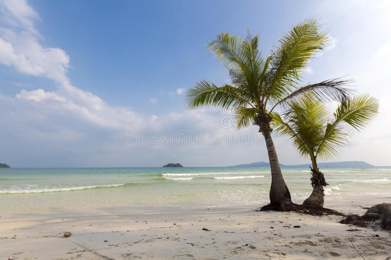 Tropical beach in Ko Rong with sea wave on the sand and palm tree royalty free stock photo