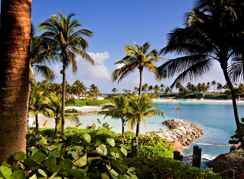 Download Tropical Beach Lagoon stock photo. Image of green, trees - 8642632