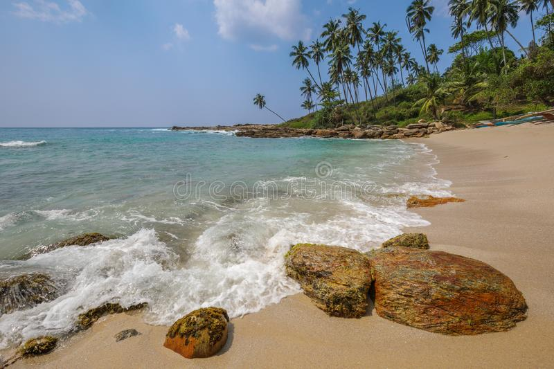 Tropical beach lined with palms in Sri Lanka stock images