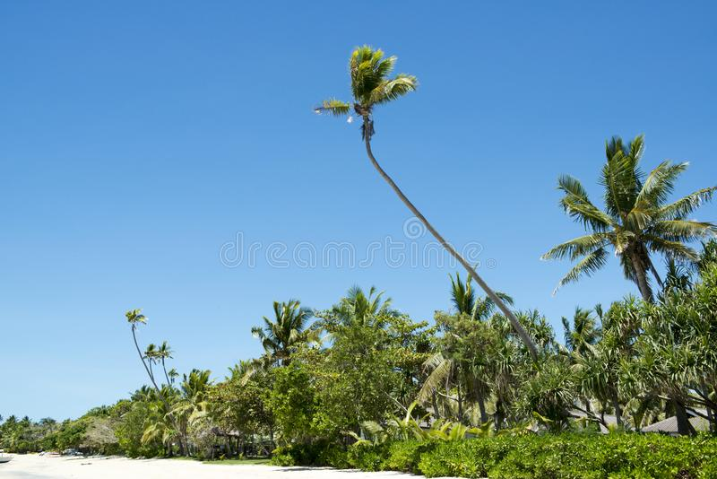 Tropical beach with lush vegetationLomani, Fiji royalty free stock images