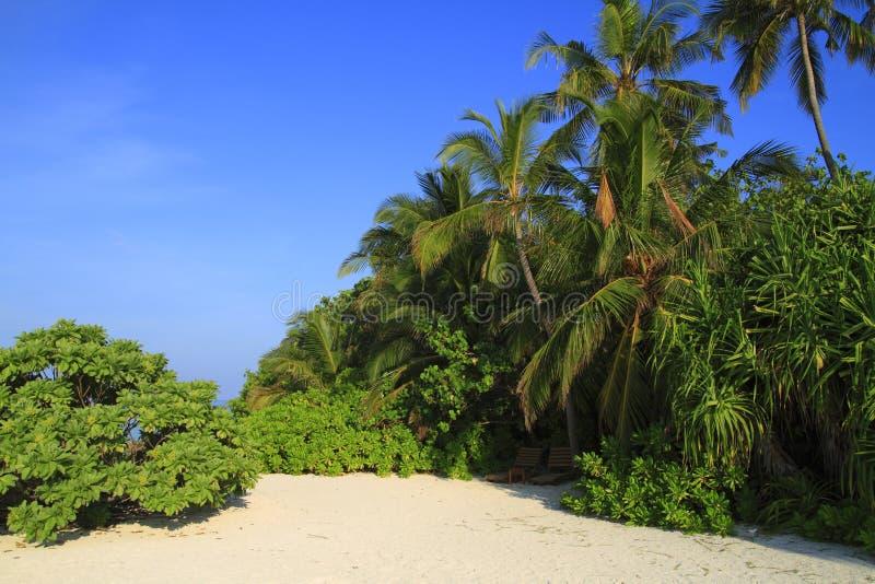 Download Tropical beach stock image. Image of bahamas, caribbean - 32900697