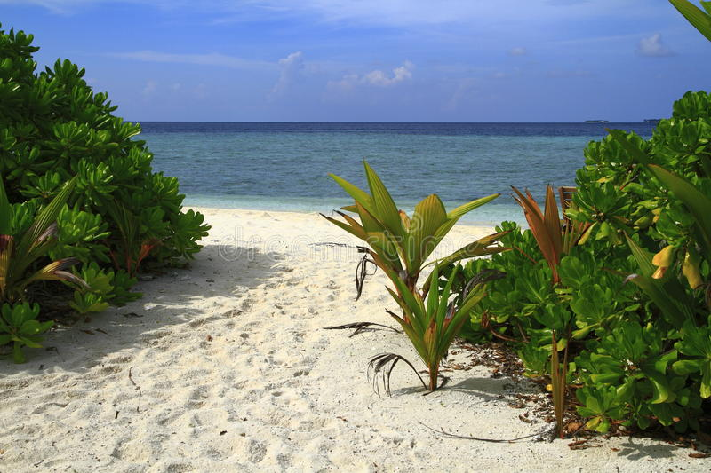 Download Tropical beach stock photo. Image of holiday, emerald - 32901732