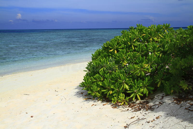 Download Tropical beach stock photo. Image of dream, indian, lagoon - 32901770
