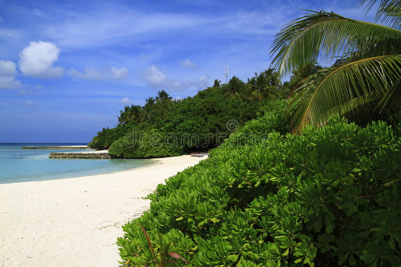 Download Tropical beach stock image. Image of oasis, landscape - 32902039