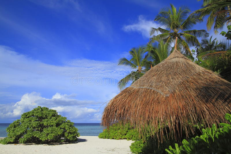 Download Tropical beach stock photo. Image of exotic, ocean, chair - 32905388