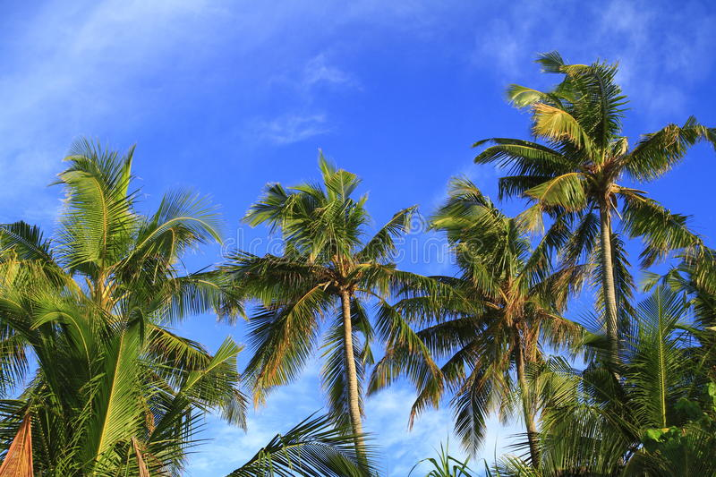 Download Tropical Beach Royalty Free Stock Image - Image: 32905806