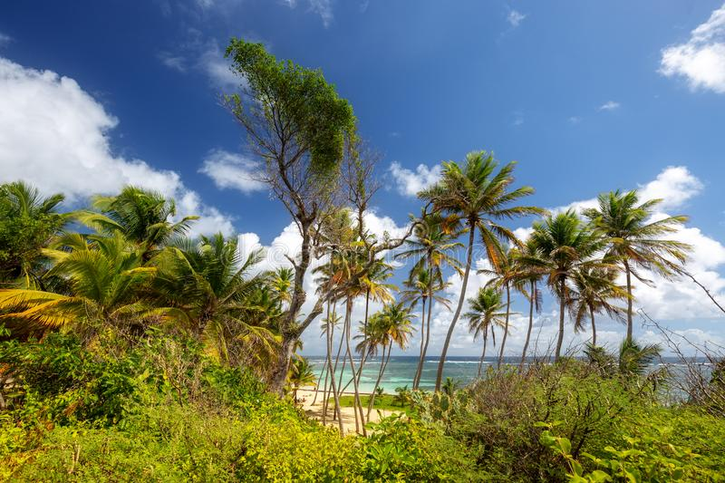 Tropical beach in Martinique, Caribbeans. Anse Michel Cap Chevalier stock image