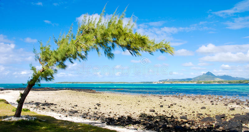 Tropical beach in Mauritius stock images