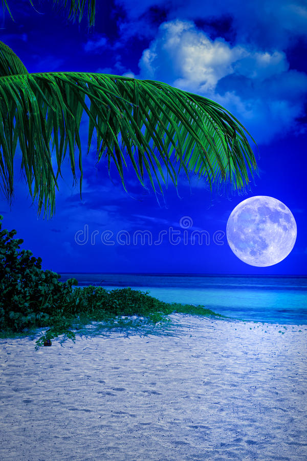 Download Tropical Beach At Night With A Full Moon Stock Image