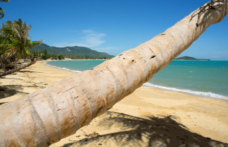 Download Tropical Beach Palm stock photo. Image of paradise, coast - 27313204