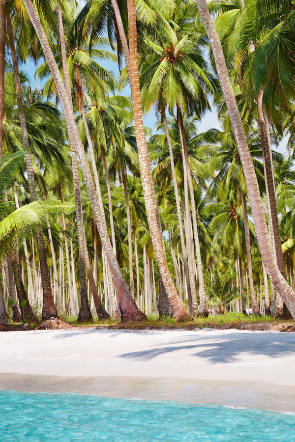 Tropical beach with palm grove stock images