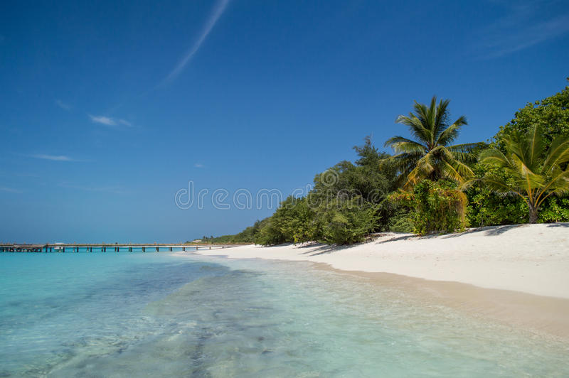 Download Tropical Beach With Palm Tree Stock Photo - Image: 29619748