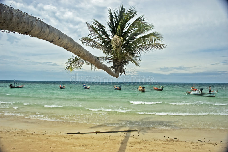 Download Tropical Beach With Palm Tree Stock Photo - Image of palm, coastal: 4760486