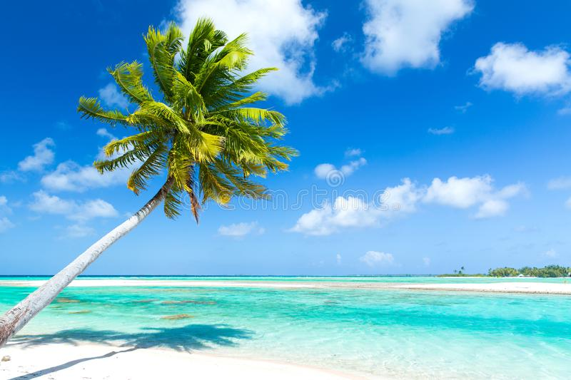 Tropical beach with palm tree in french polynesia. Travel, seascape and nature concept - tropical beach with palm tree in french polynesia stock images