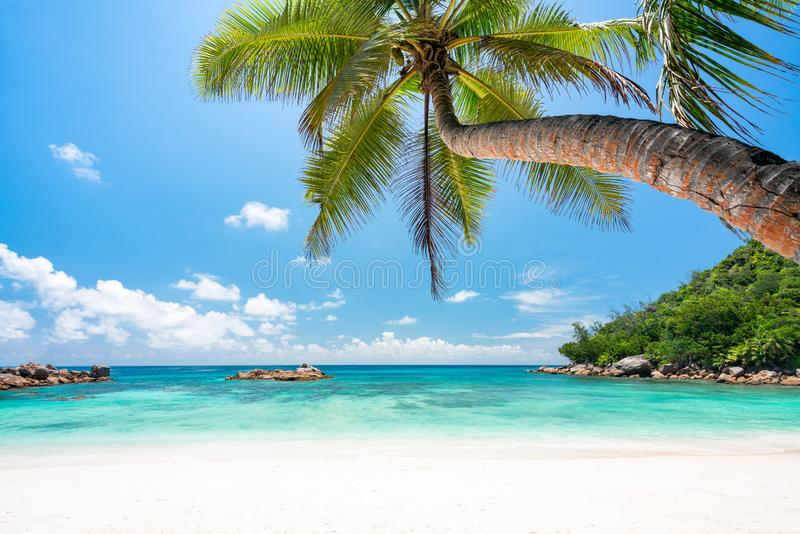 Tropical beach with palm tree, white sand and turqoise water stock photos