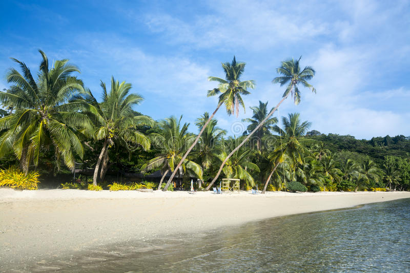 Download Tropical Beach With Palm Trees Royalty Free Stock Photos - Image: 38086408