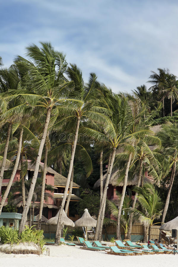 Tropical Beach With Palm Trees And Chairs Stock Image