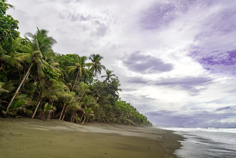Beach with palm trees in Corcovado national park. Tropical beach with palm trees in Corcovado national park in Costa Rica royalty free stock images