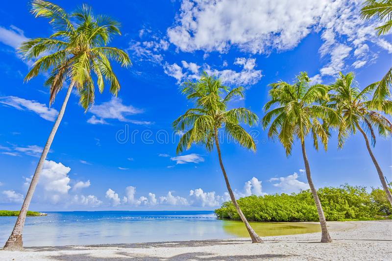 TROPICAL BEACH PALM TREES ISLAND royalty free stock images