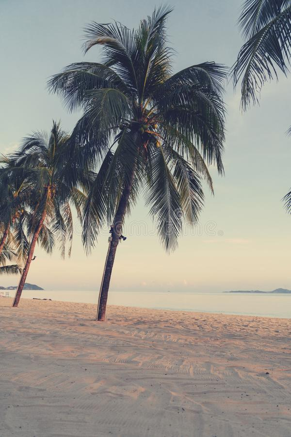 Tropical beach with palm trees and white sand at sunset, retro toning. Vertical shot royalty free stock images