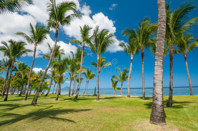 Download Tropical beach with palms stock photo. Image of leaf - 34030578