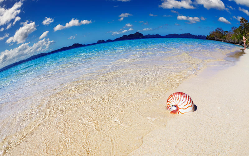 Download Tropical Beach, Philippines Stock Photo - Image of clear, female: 31609570