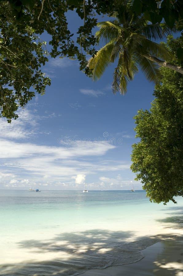 Download Tropical Beach scene stock photo. Image of clouds, horizon - 17949648