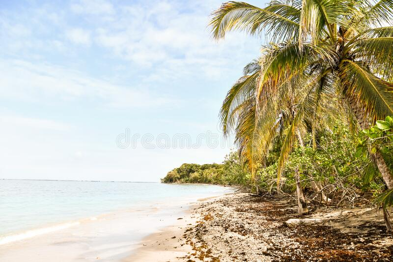 Tropical beach and sea, in costa rica central america. Tropical beach and sea, photo as a background, digital image stock image